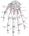 Изображение - Первых межфаланговых суставов 98px-Gray220