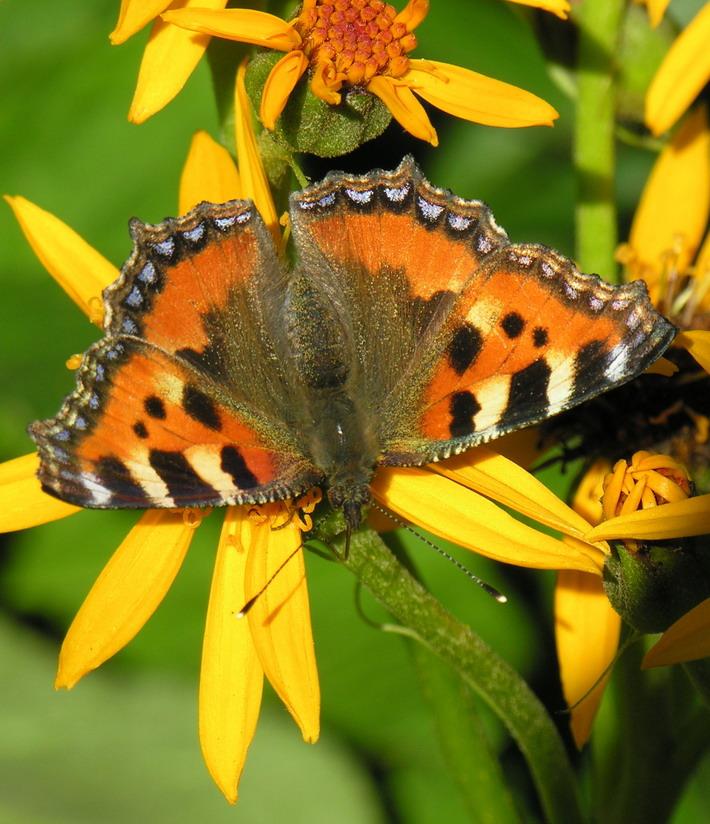 Фото бабочек Фотография бабочки