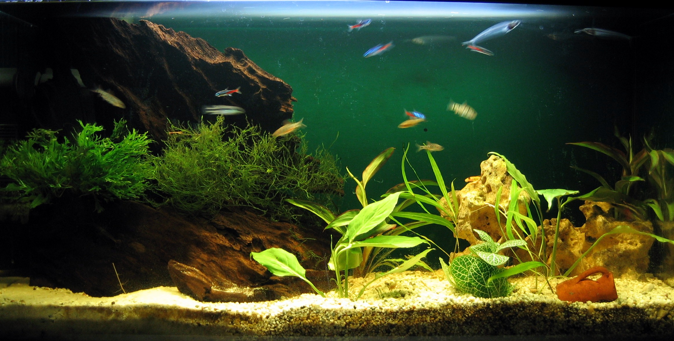 for Easy aquarium fish