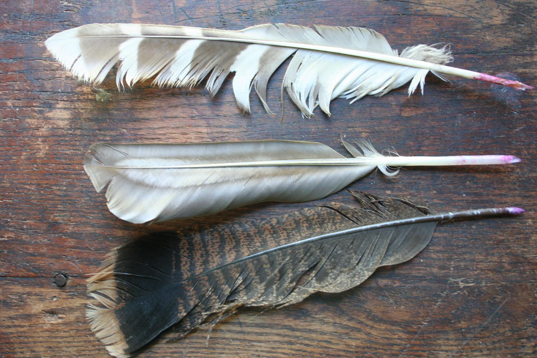 древние птичье перо показать фото ценят уважают