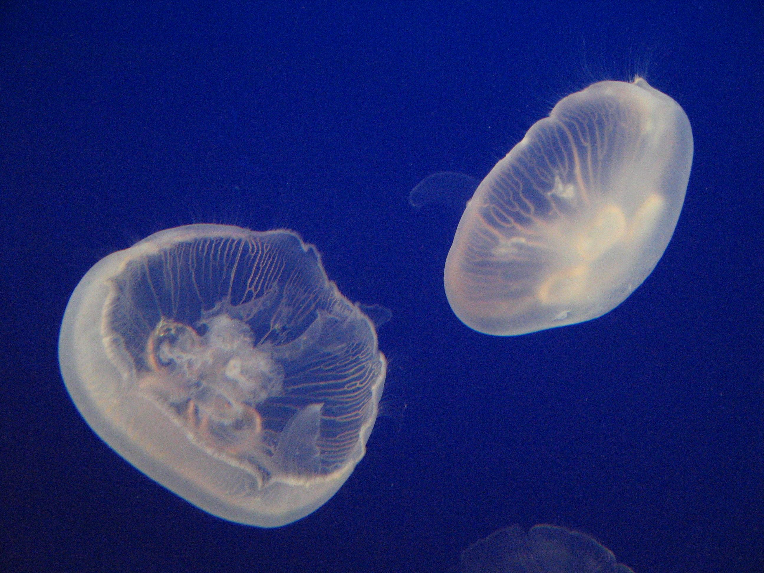 Сперма прозрачная комочками 15 фотография