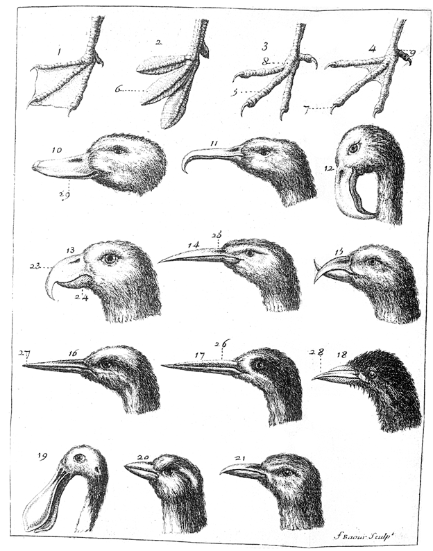 Разные виды клювов у птиц и