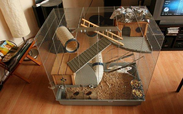 Как сделать клетку для крысы в домашних условиях