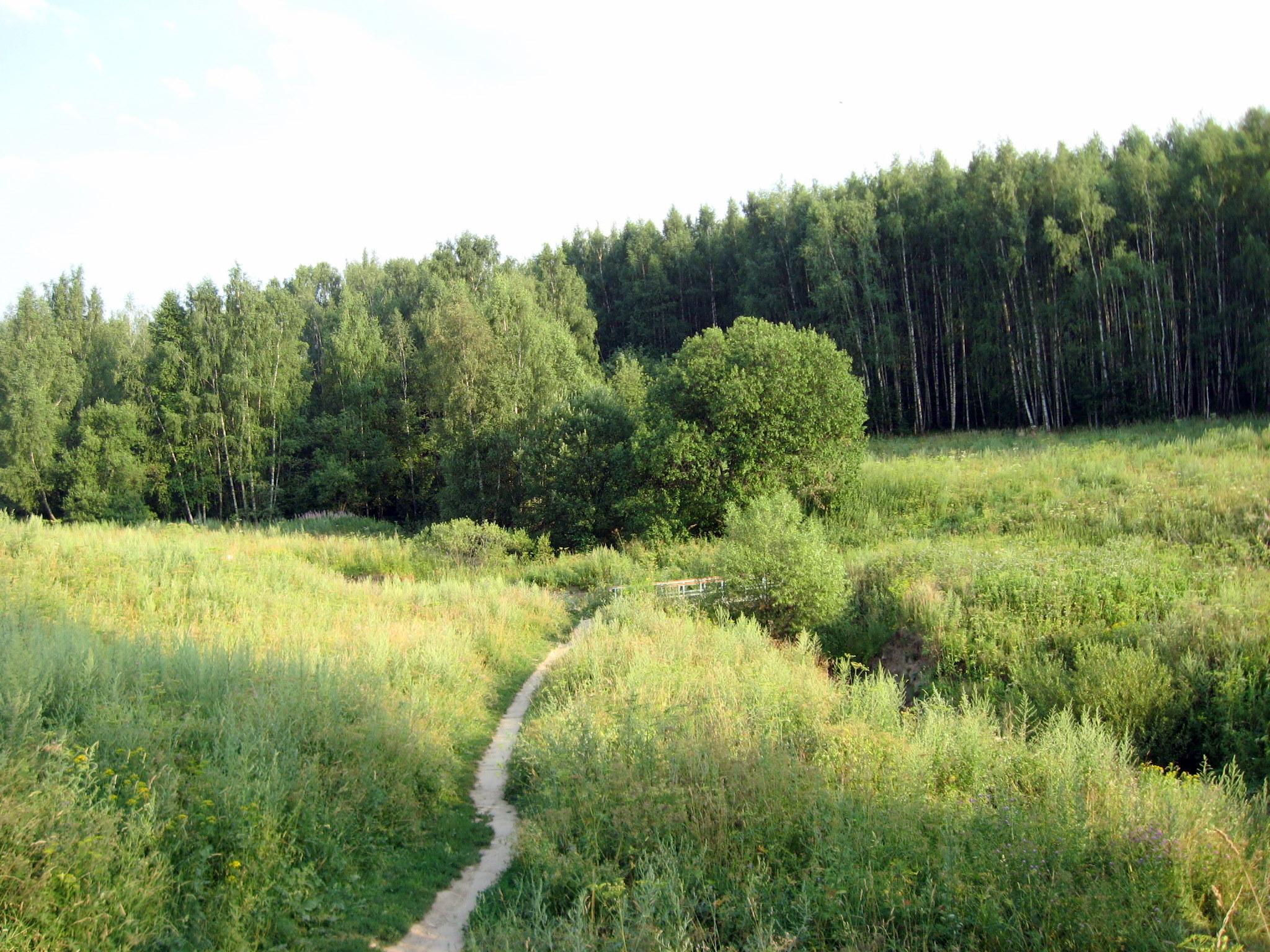 Картинки по запросу Битцевский лес москва