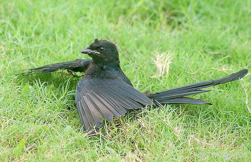 Доисторические хищники - 02 - Хищные птице-ящеры.ts