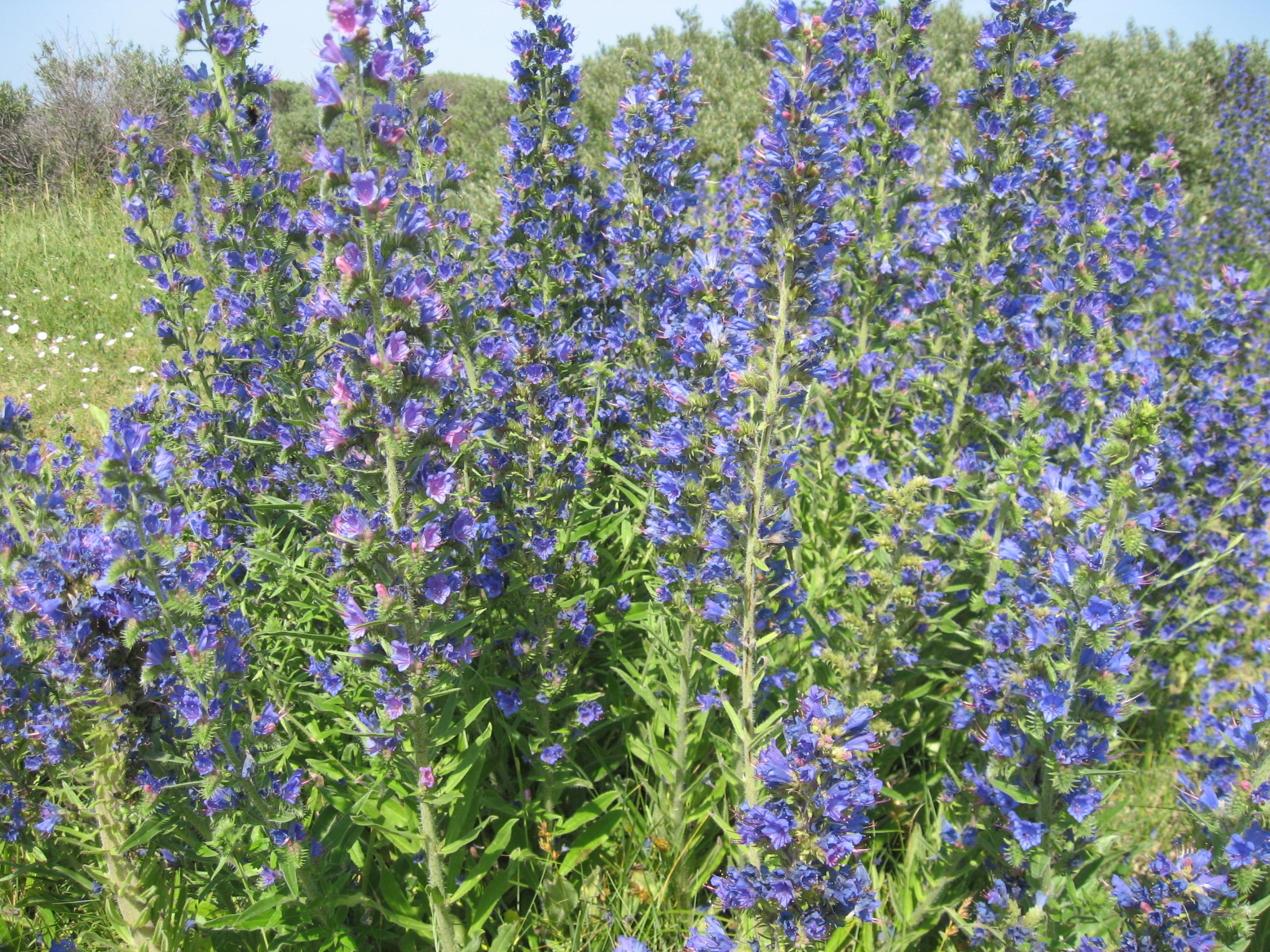 Семена экзотических и редких растений Экзотические