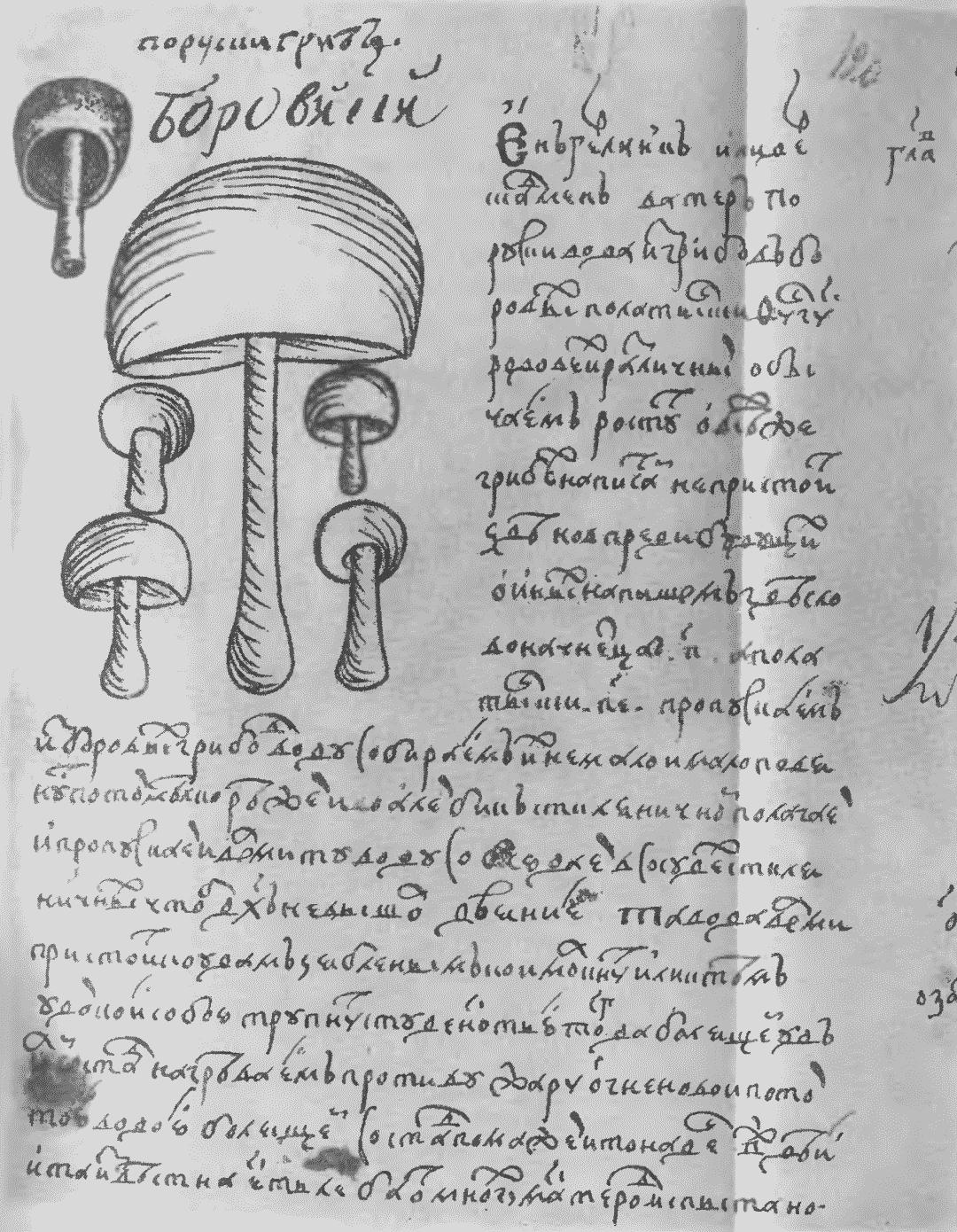 древние травники лечебники картинки здесь художник
