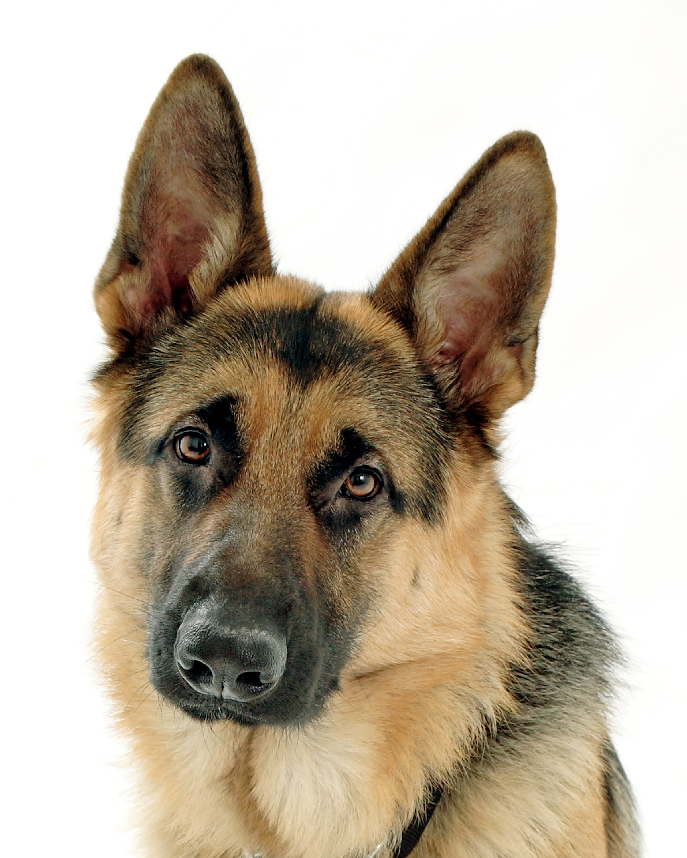 выставка собак одесса.