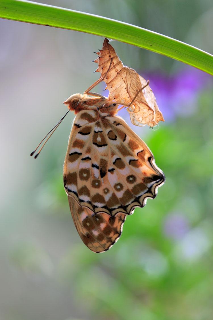 Армянские секс бабочки