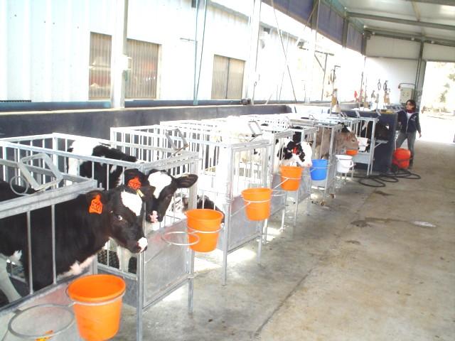 Что такое животноводство
