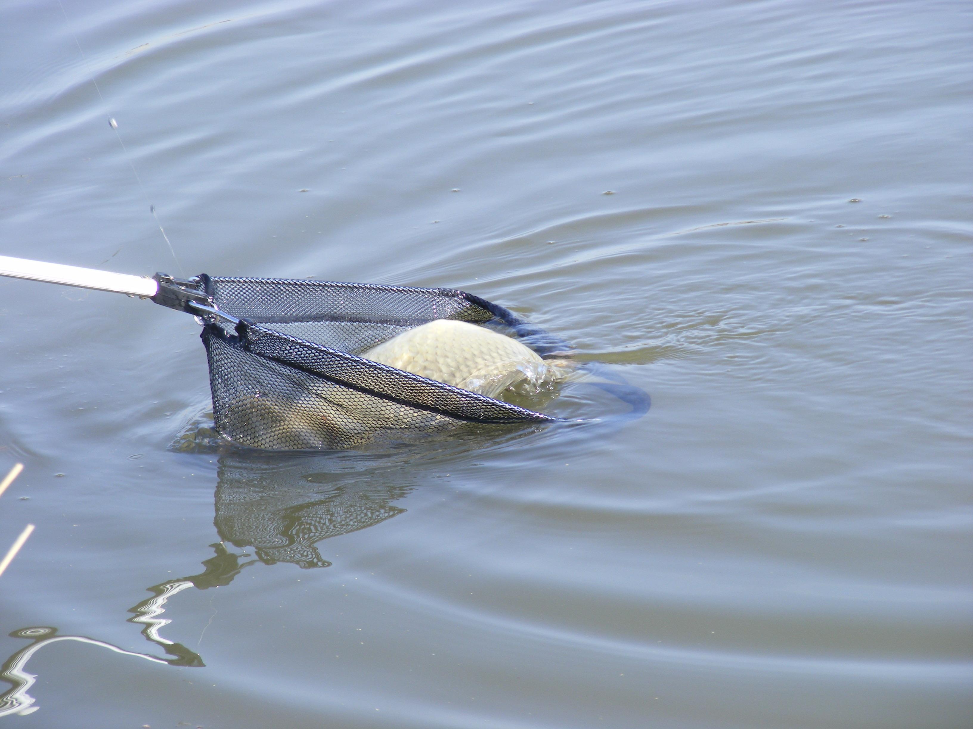 сак для ловли рыбы