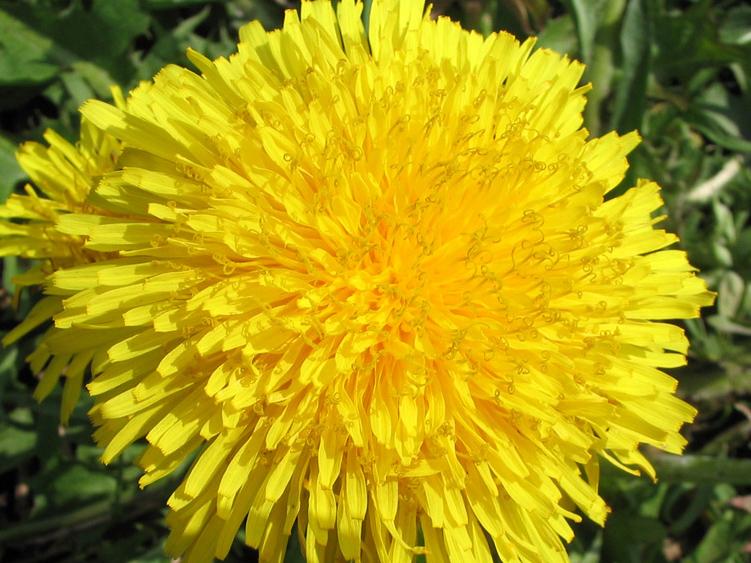 Что обозначает желтый цвет