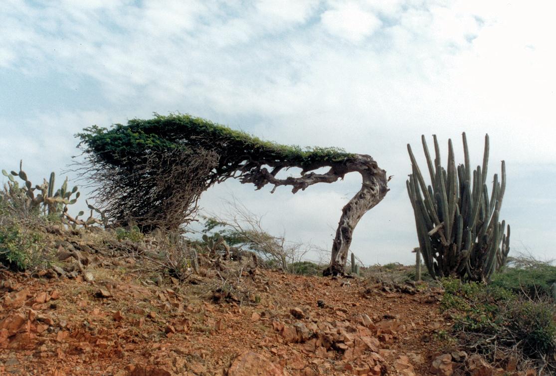 так давно фото природных аномалий деревья в мексику позах запросу