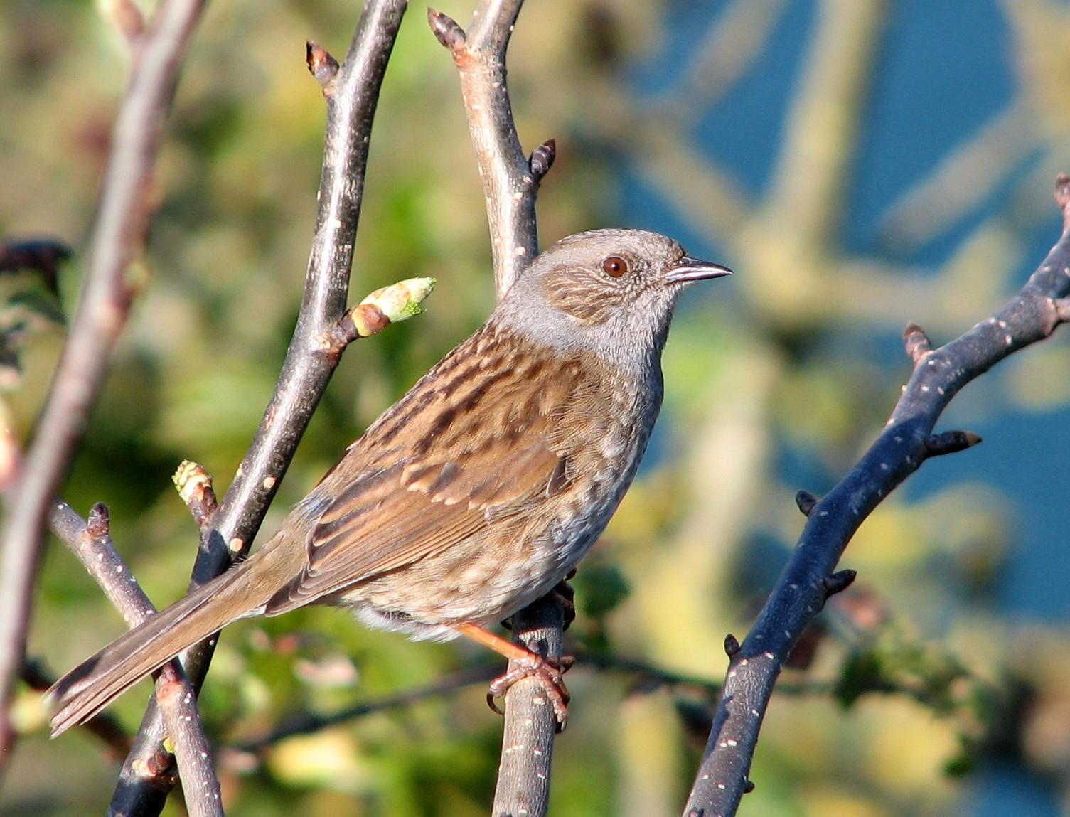 Дрозды - это большое семейство певчих птиц, которых вы можете найти во многих уголках земного шара.