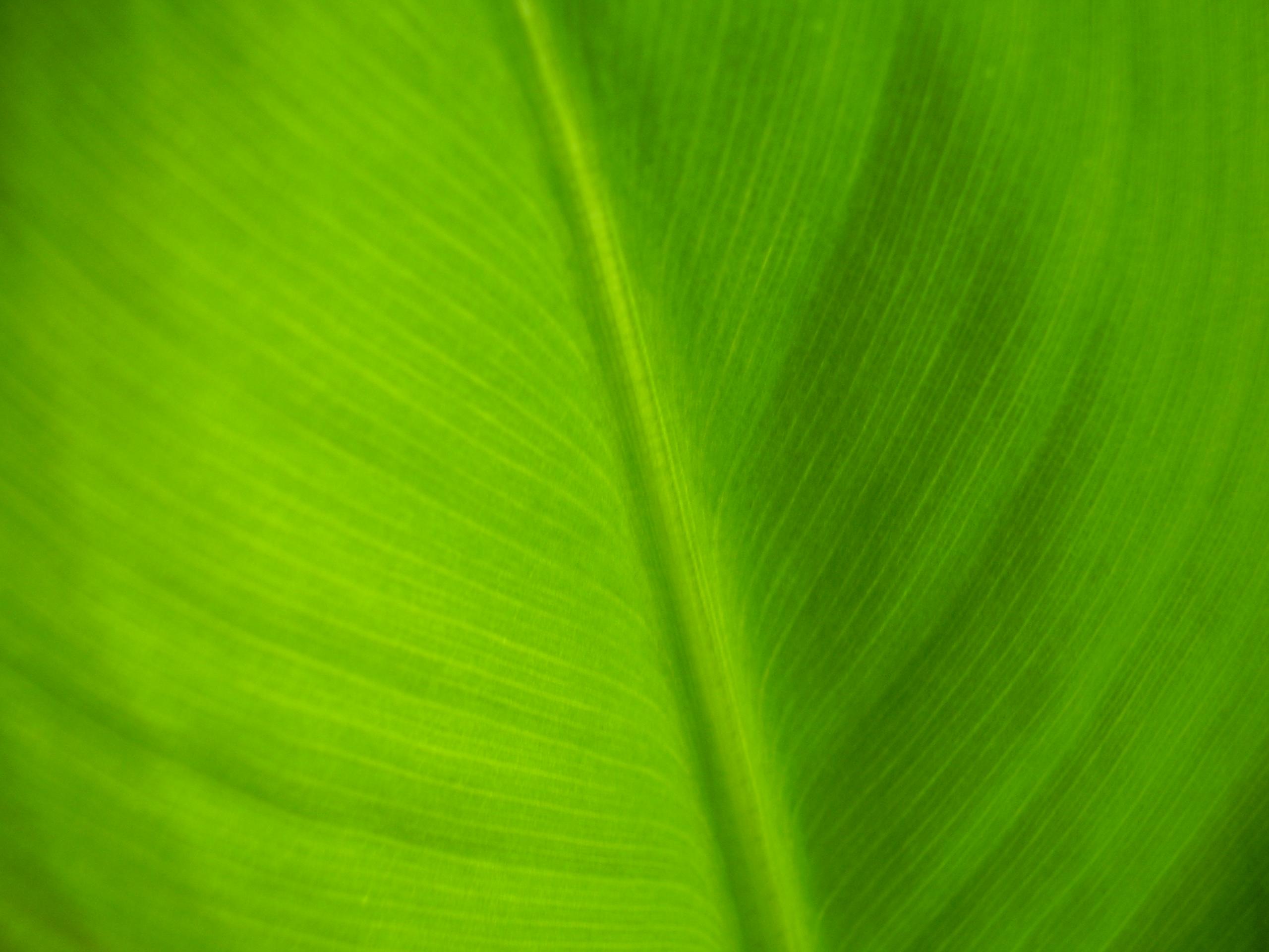Зелёный цвет это цвет