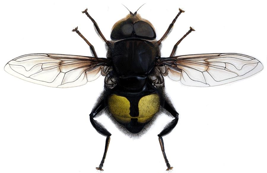 Список таксонов животных названных в