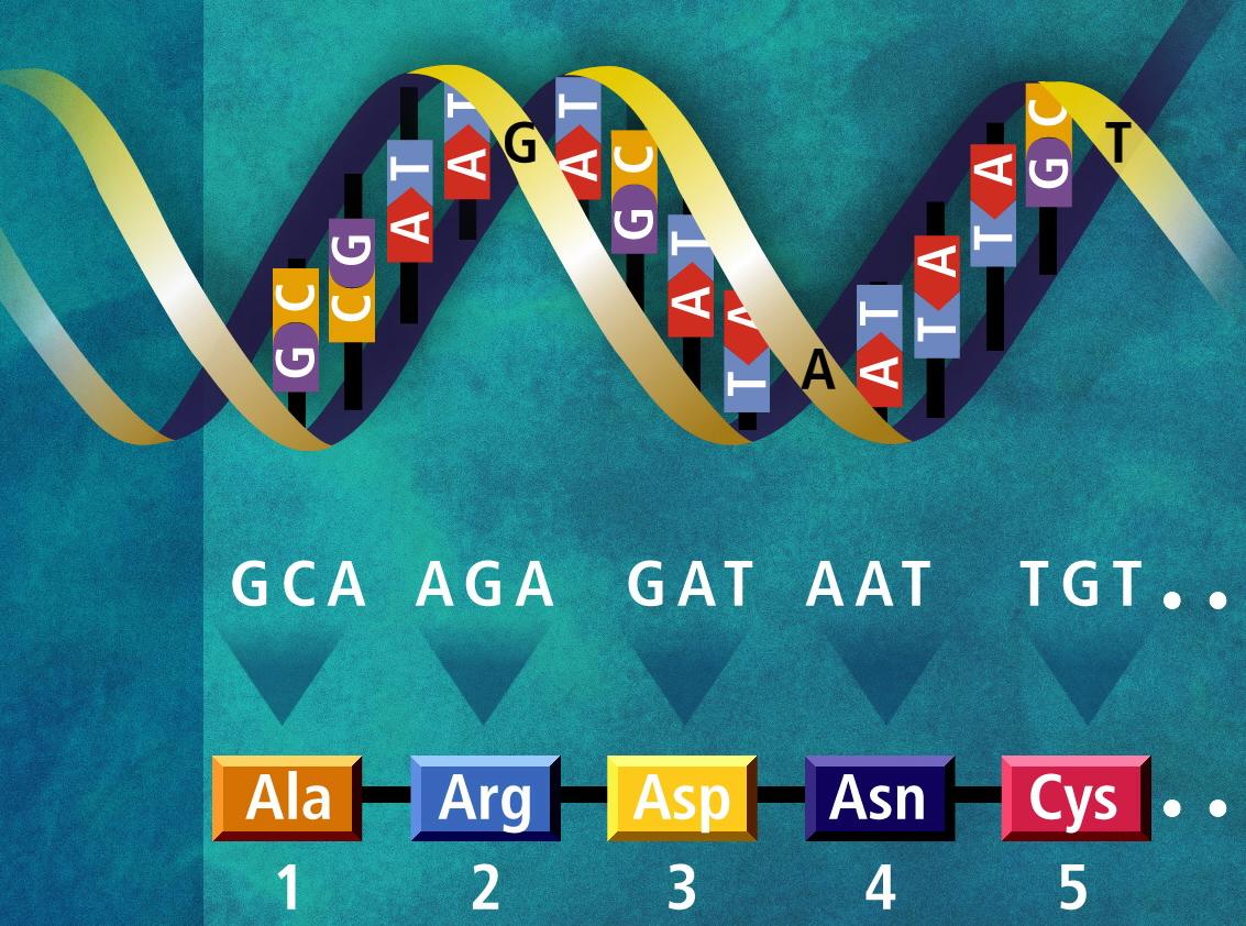 Код Генетический