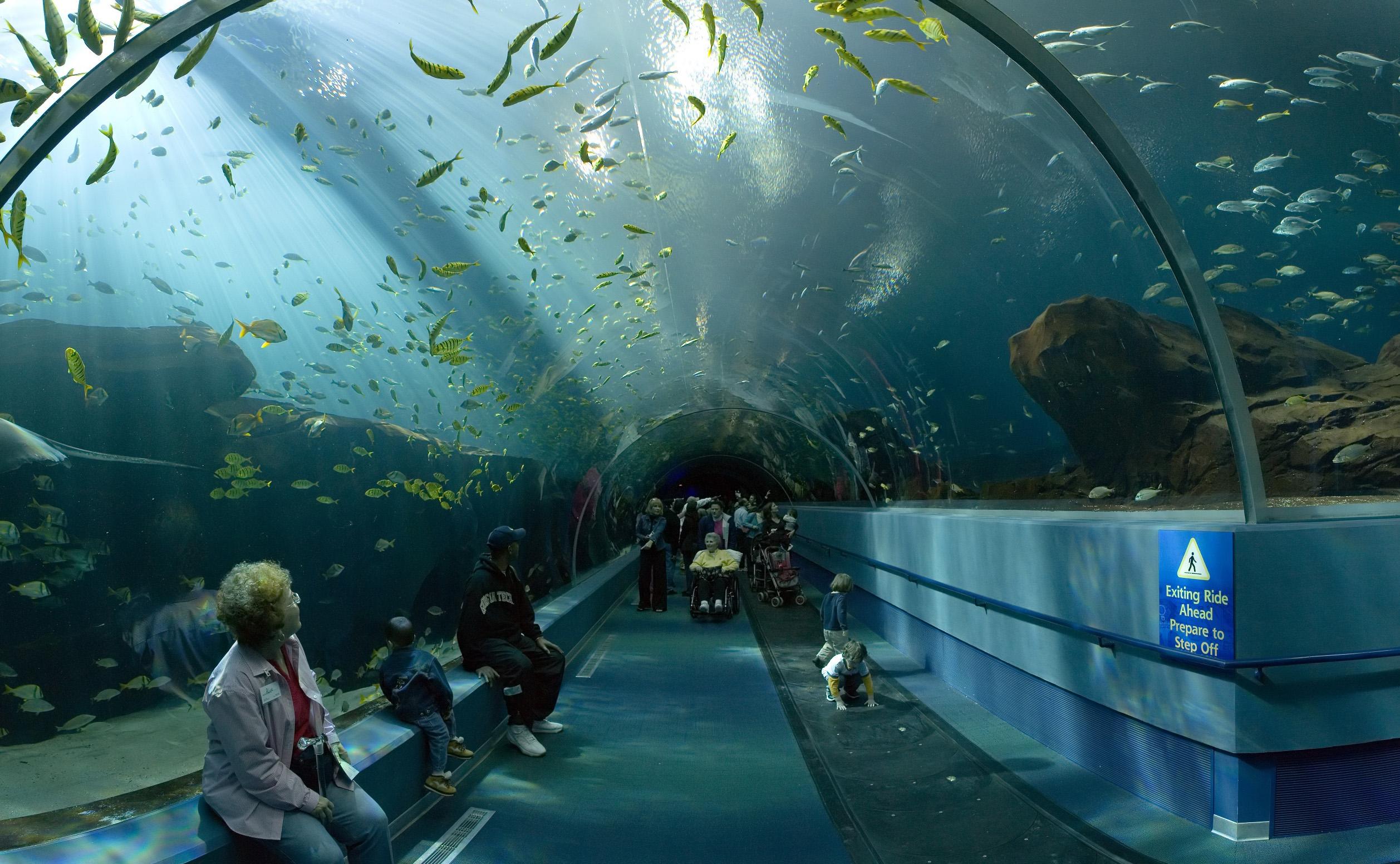 Картинки по запросу океанариум