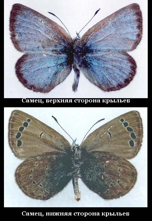 Растения красной книги казахстана