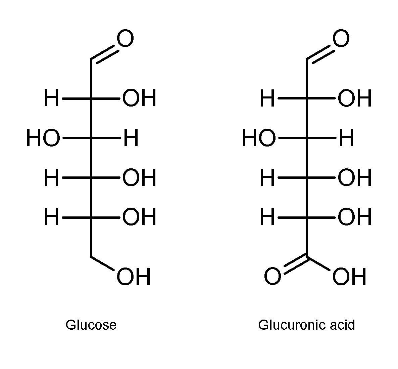 Кислота глюкуроновая фото
