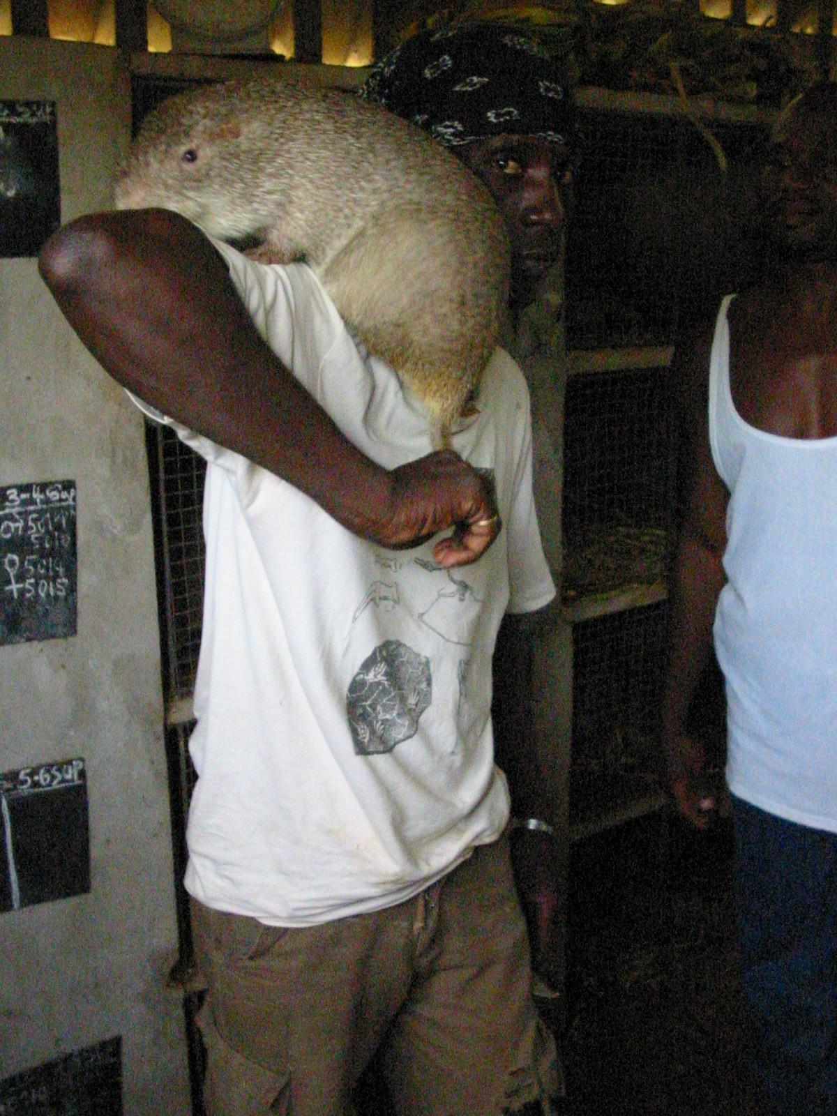 Фото больших крыс 4 фотография