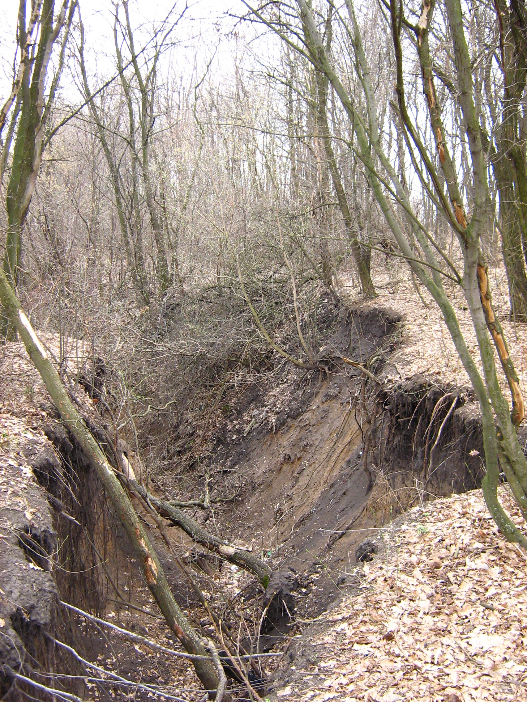 http://dic.academic.ru/pictures/wiki/files/71/Gully_in_the_Kharkov_region.jpg