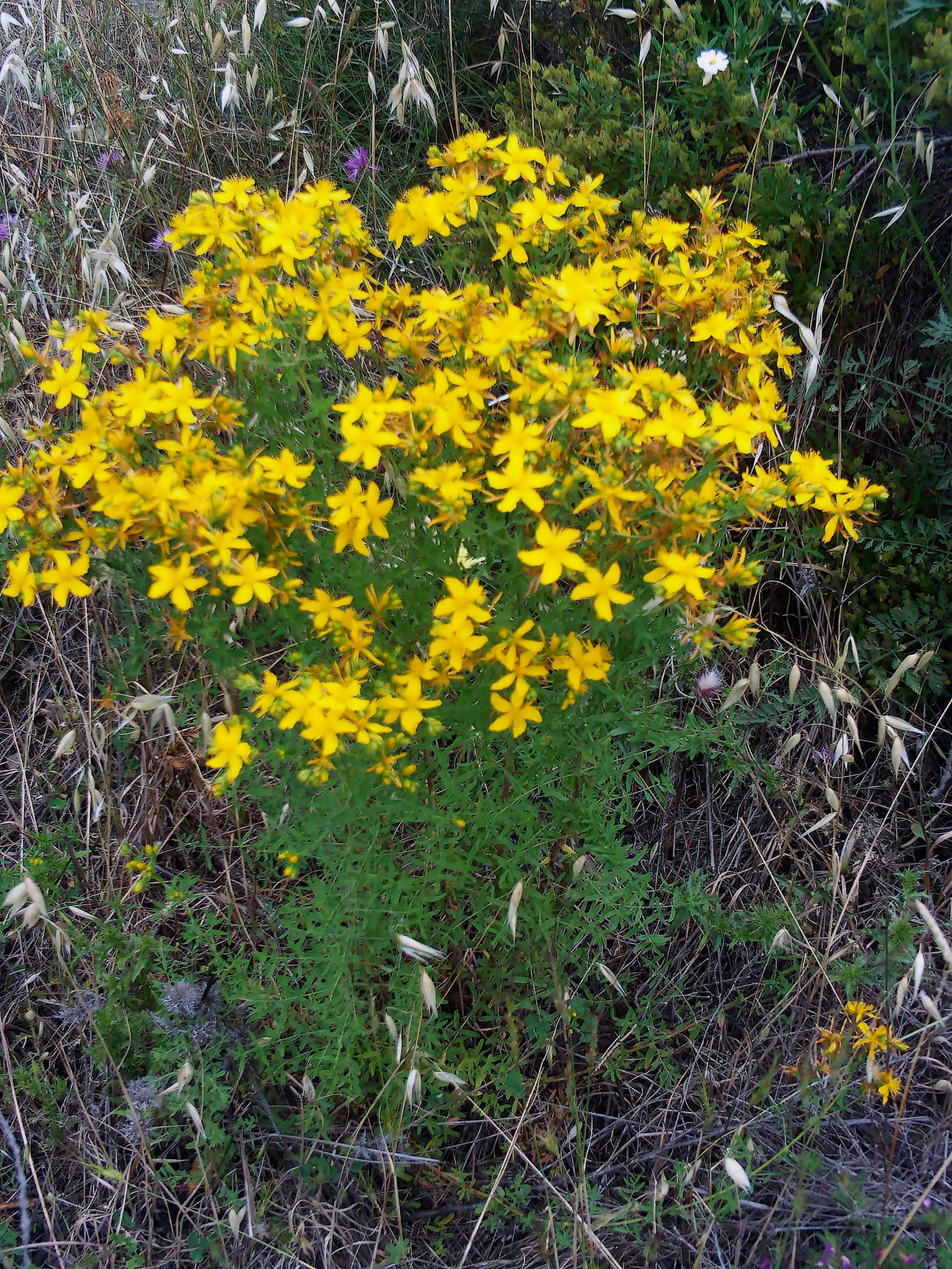 лекарственные травы от глистов лечение