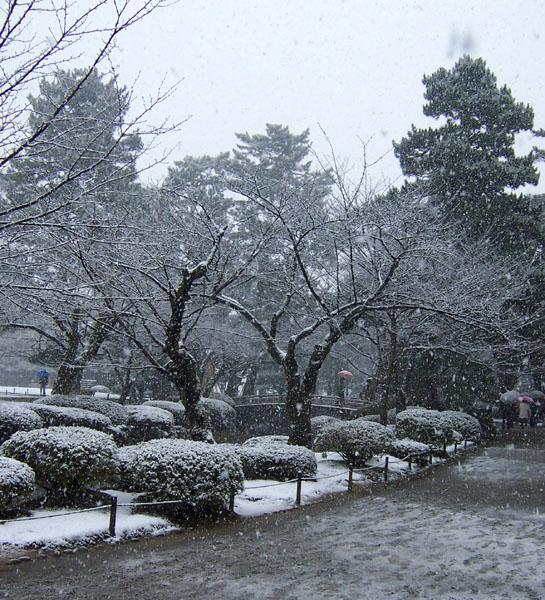 Плодовый сад зимой под снегом