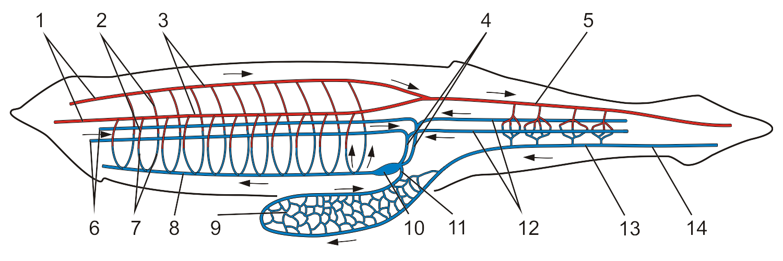 Scheme  Wikipedia