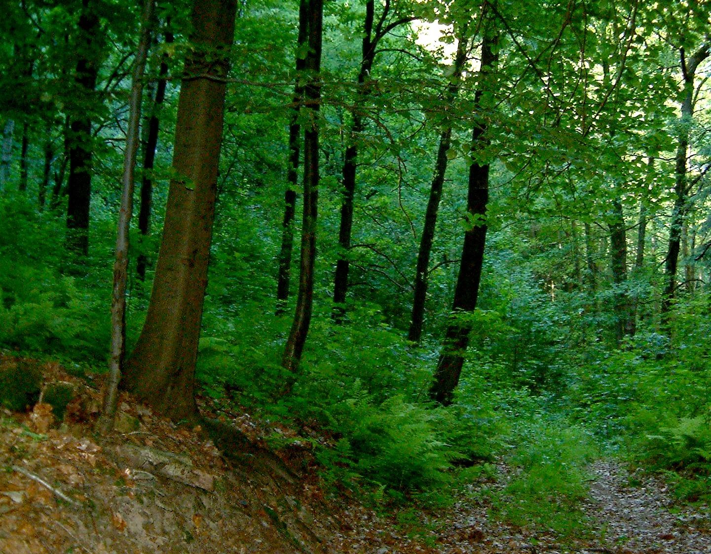 Лиственный лес в германии