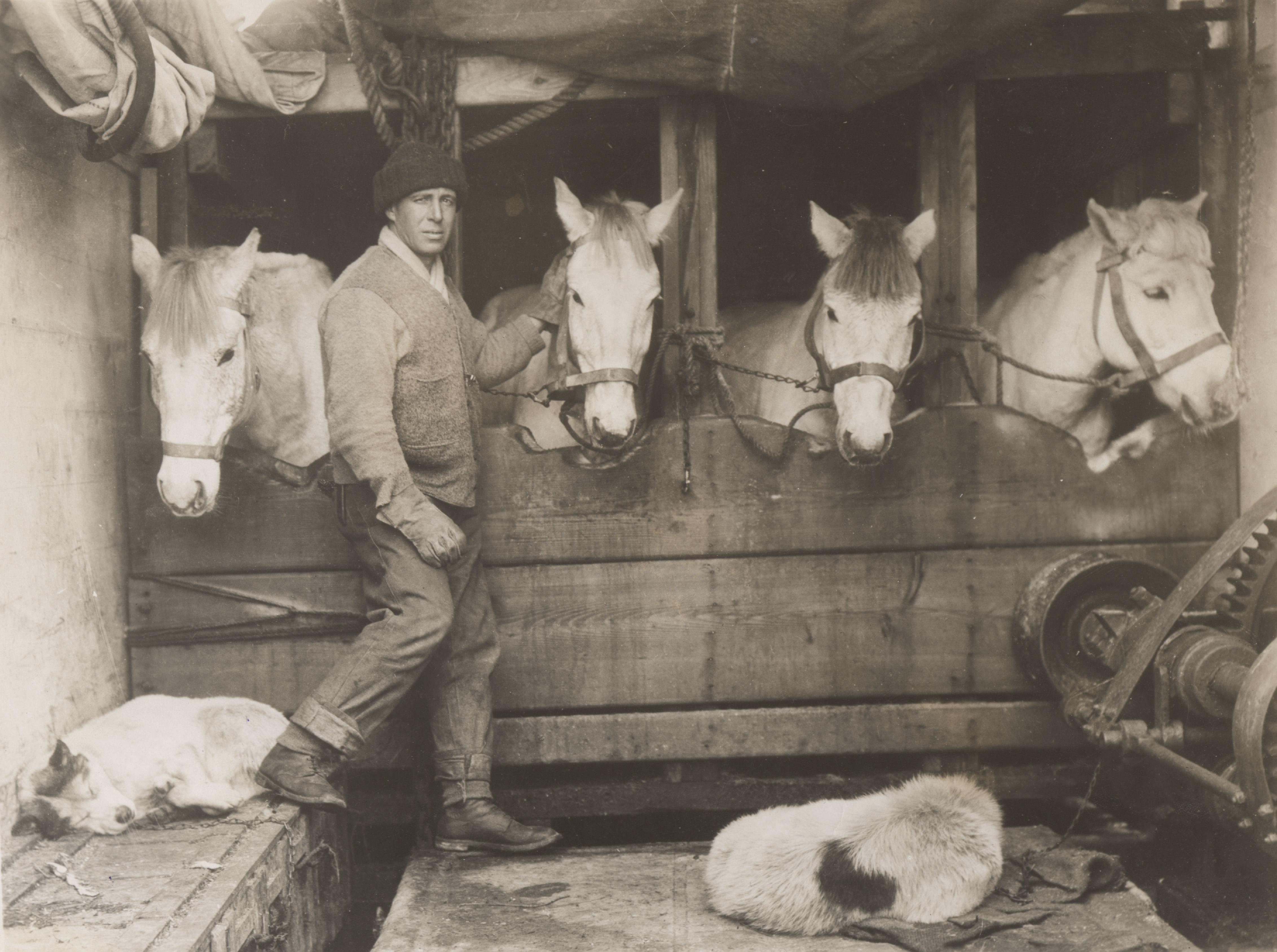 Секс в конюшне с конюхом 13 фотография