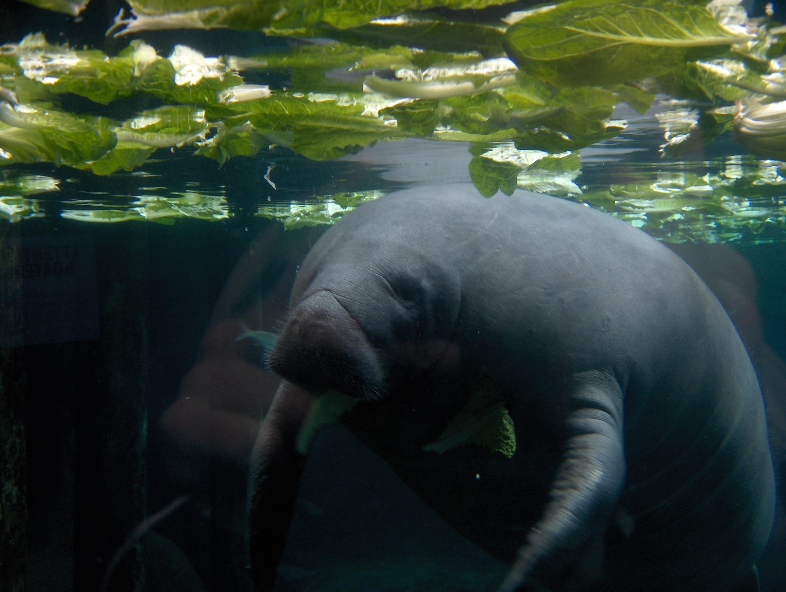 Фото морських тварин 13 фотография