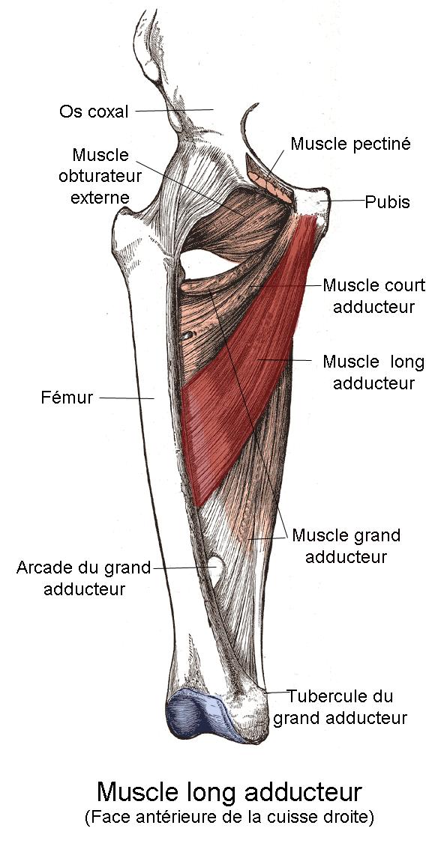 Мышца противопоставляющая