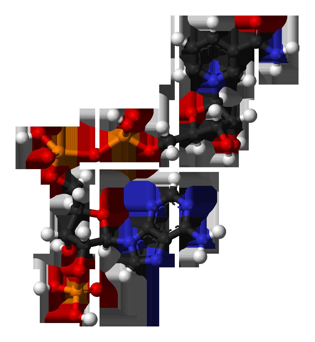 никотинамидадениндинуклеотидфосфат фото