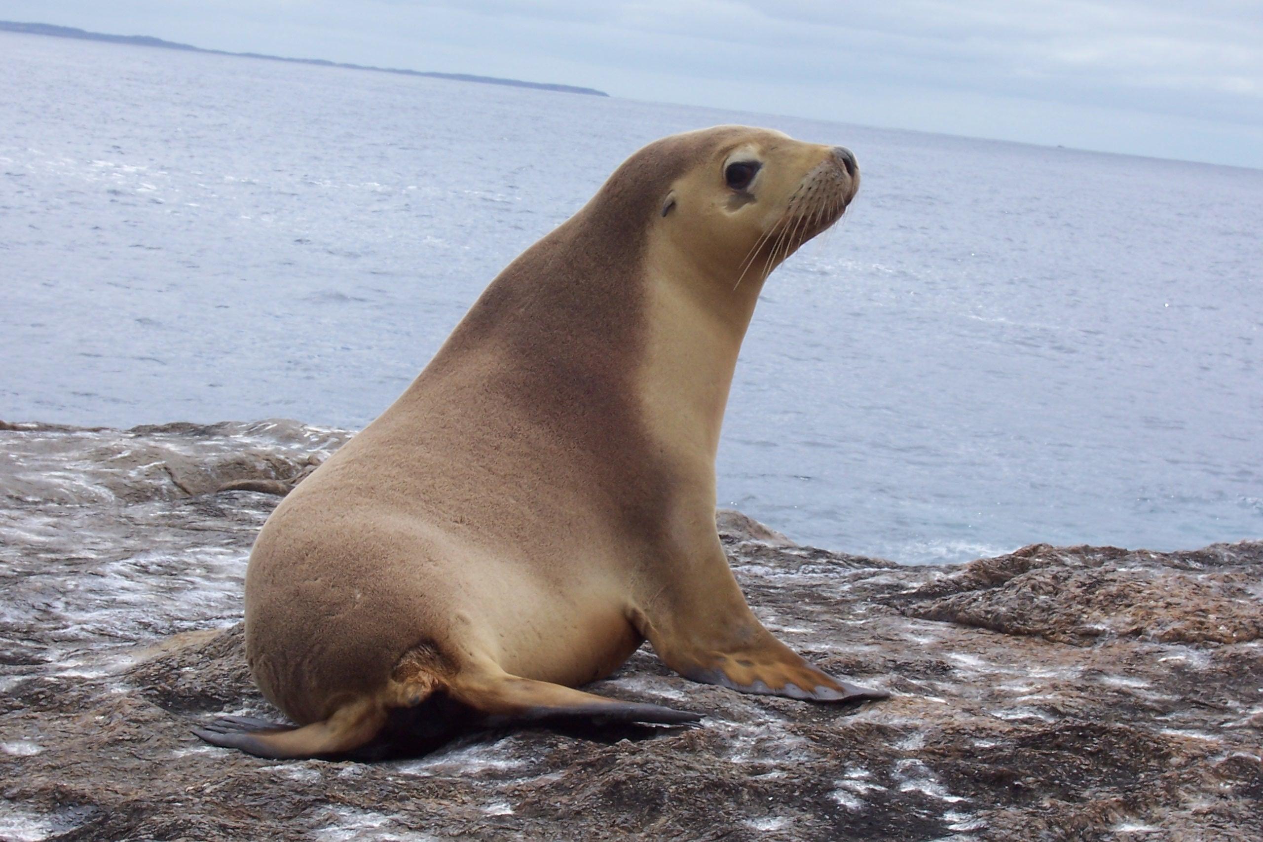 صور اسد البحر    Photo sea lion