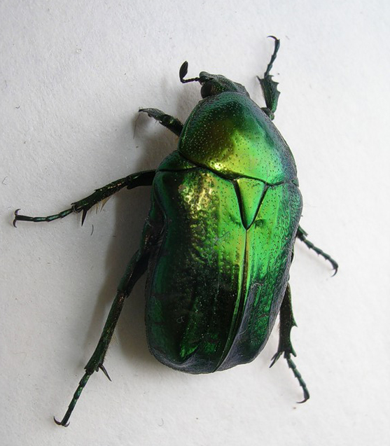 жуки список с фото