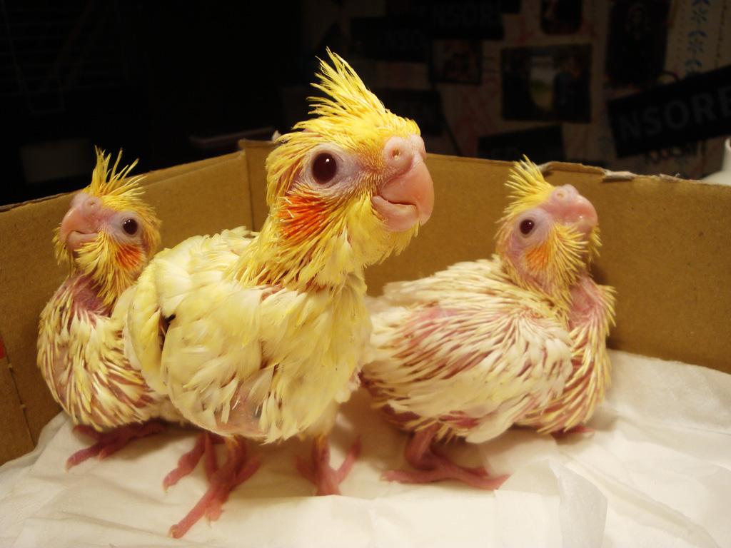 Попугаи: виды домашних попугайчиков, как выбрать и сколько