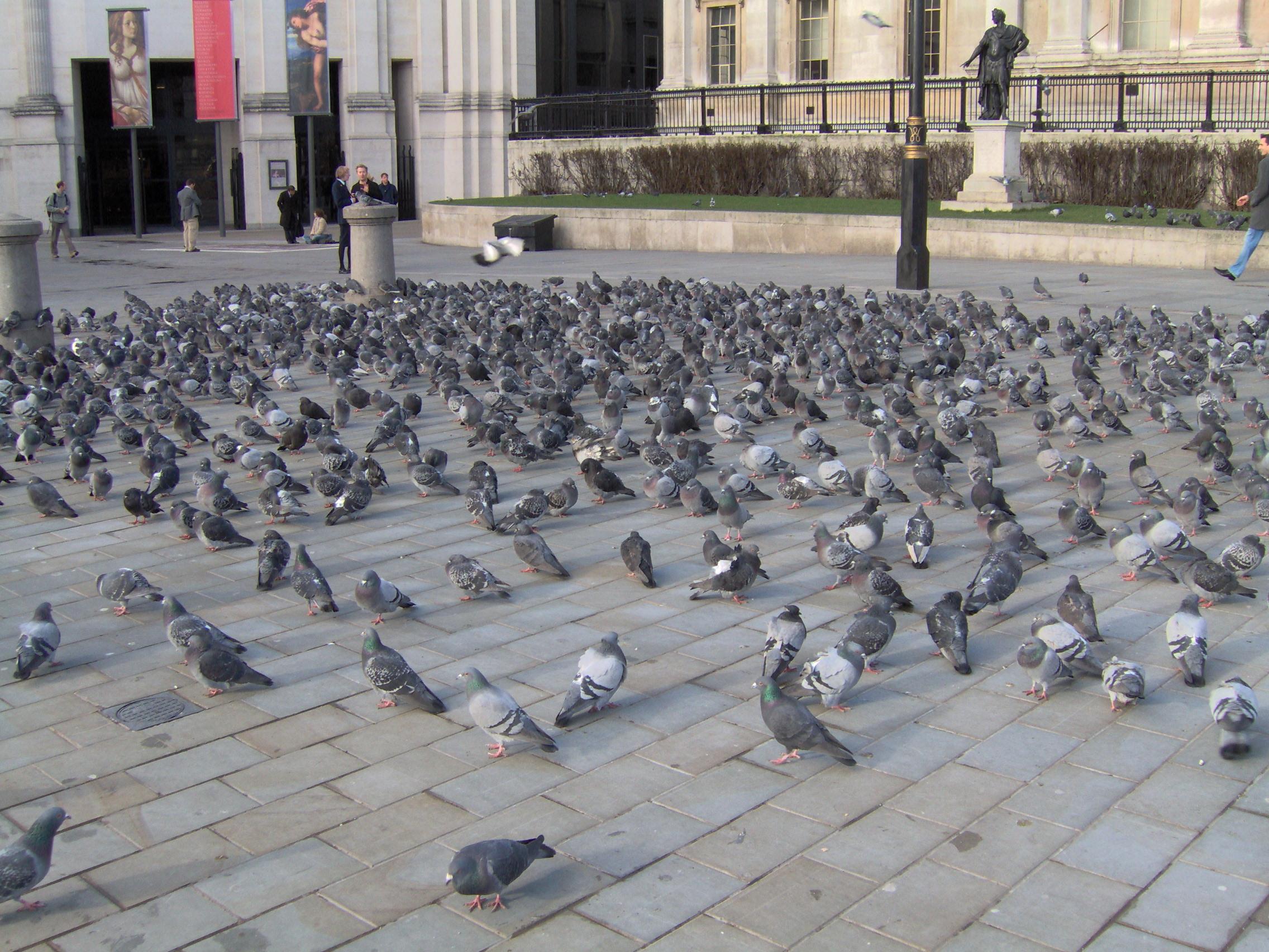 http://dic.academic.ru/pictures/wiki/files/80/PigeonsVermin.jpg