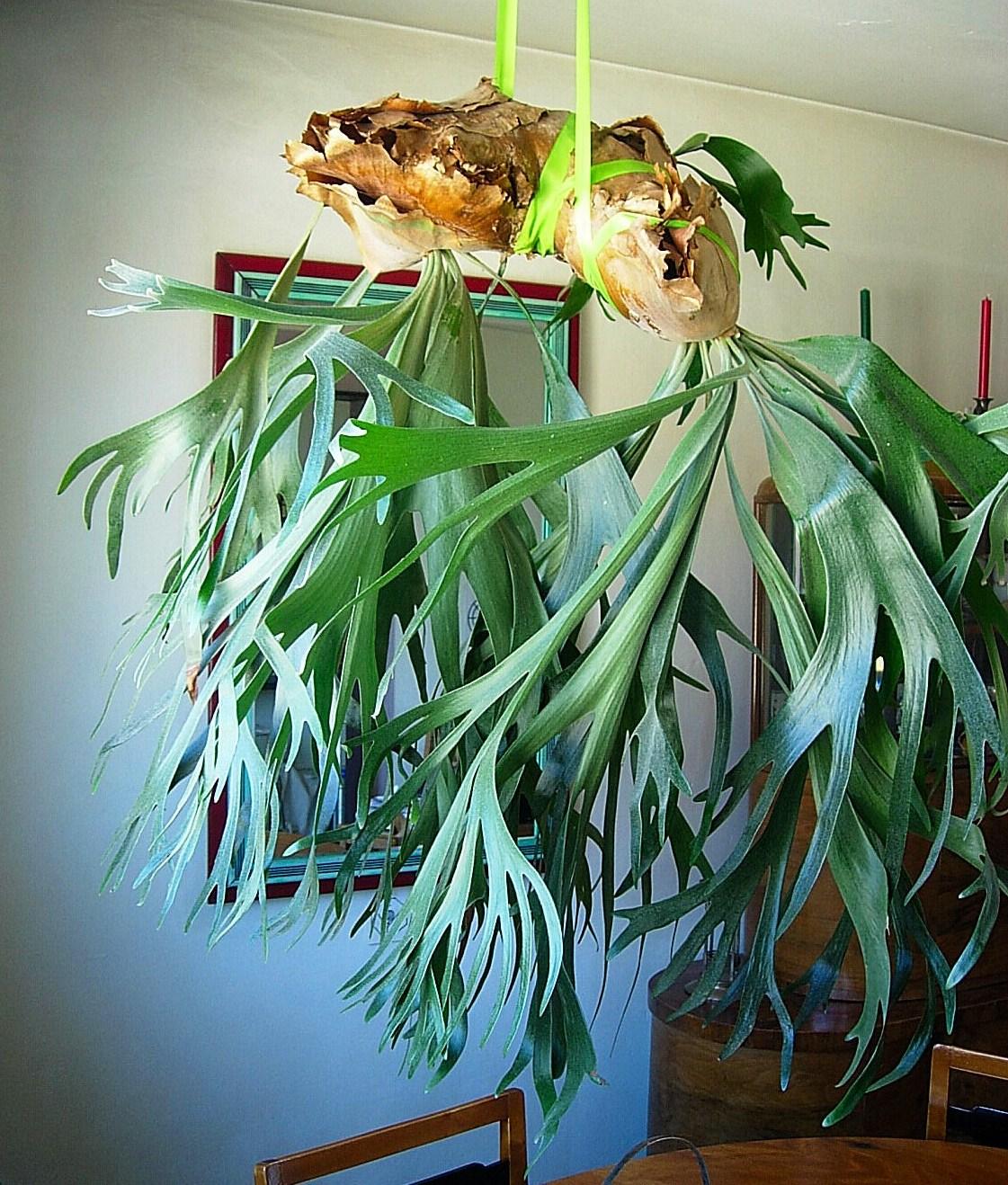 Растения субтропиков  biofileru