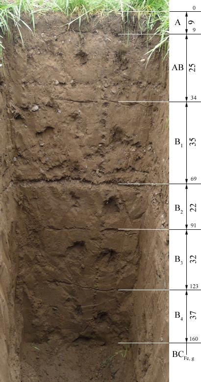дерново-глееватой почвы;