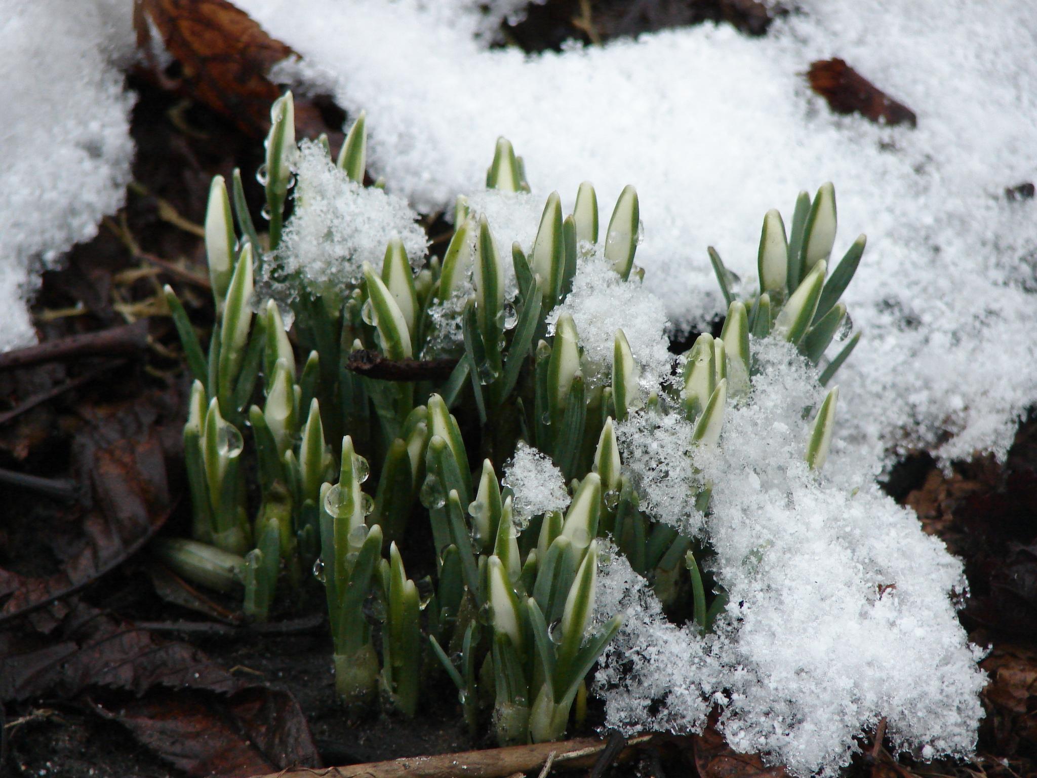 была картинки холодный апрель представляют сбой ящериц