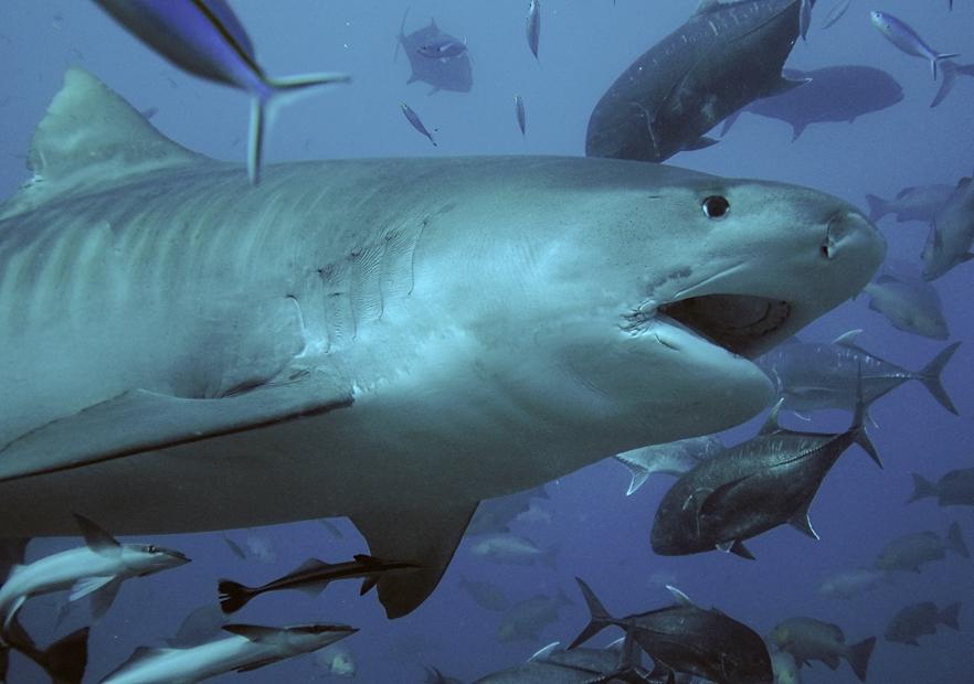 Смотреть про акул и про порно 10 фотография