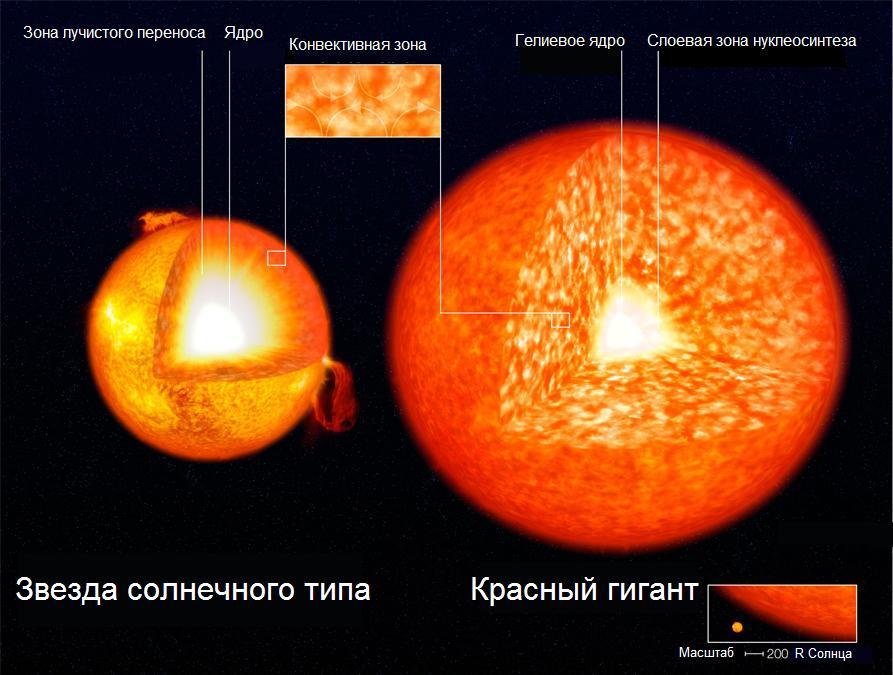 Строение звезды главной последовательности солнечного типа и красного гиганта с изотермическим гелиевым ядром и слоевой зоной нуклеосинтеза