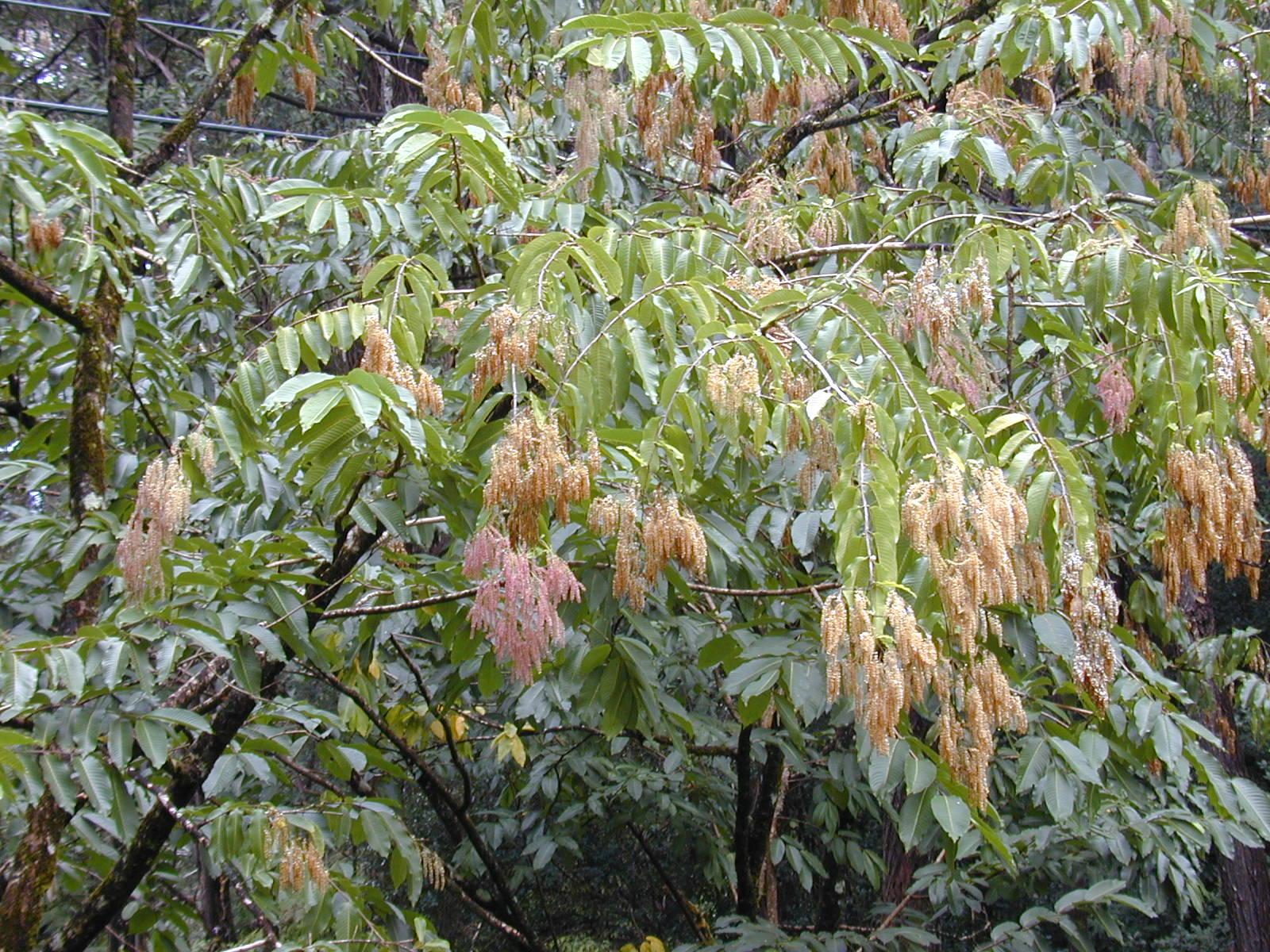 Растения фотографии