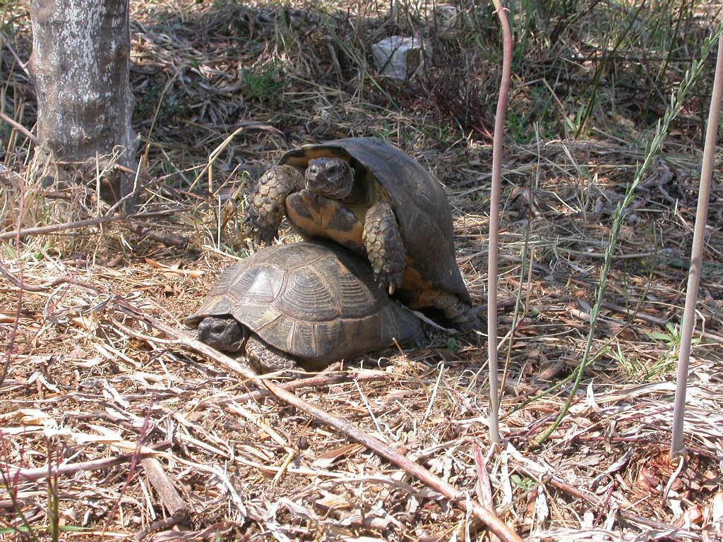 Сухопутная черепаха чем кормить - 945