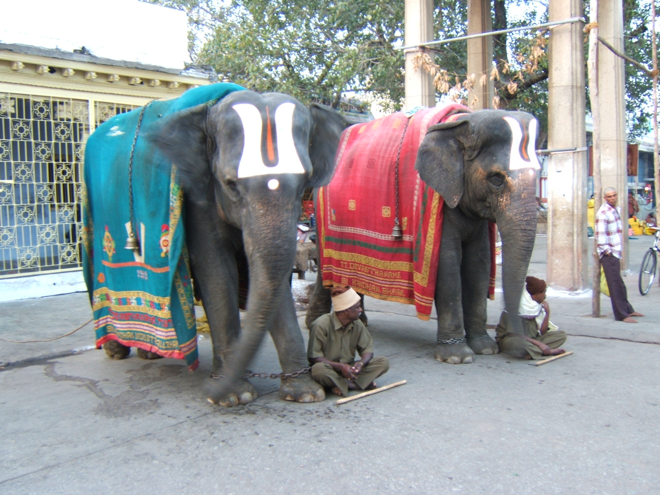 http://dic.academic.ru/pictures/wiki/files/84/Temple_elephants_Tirupati_India.JPG
