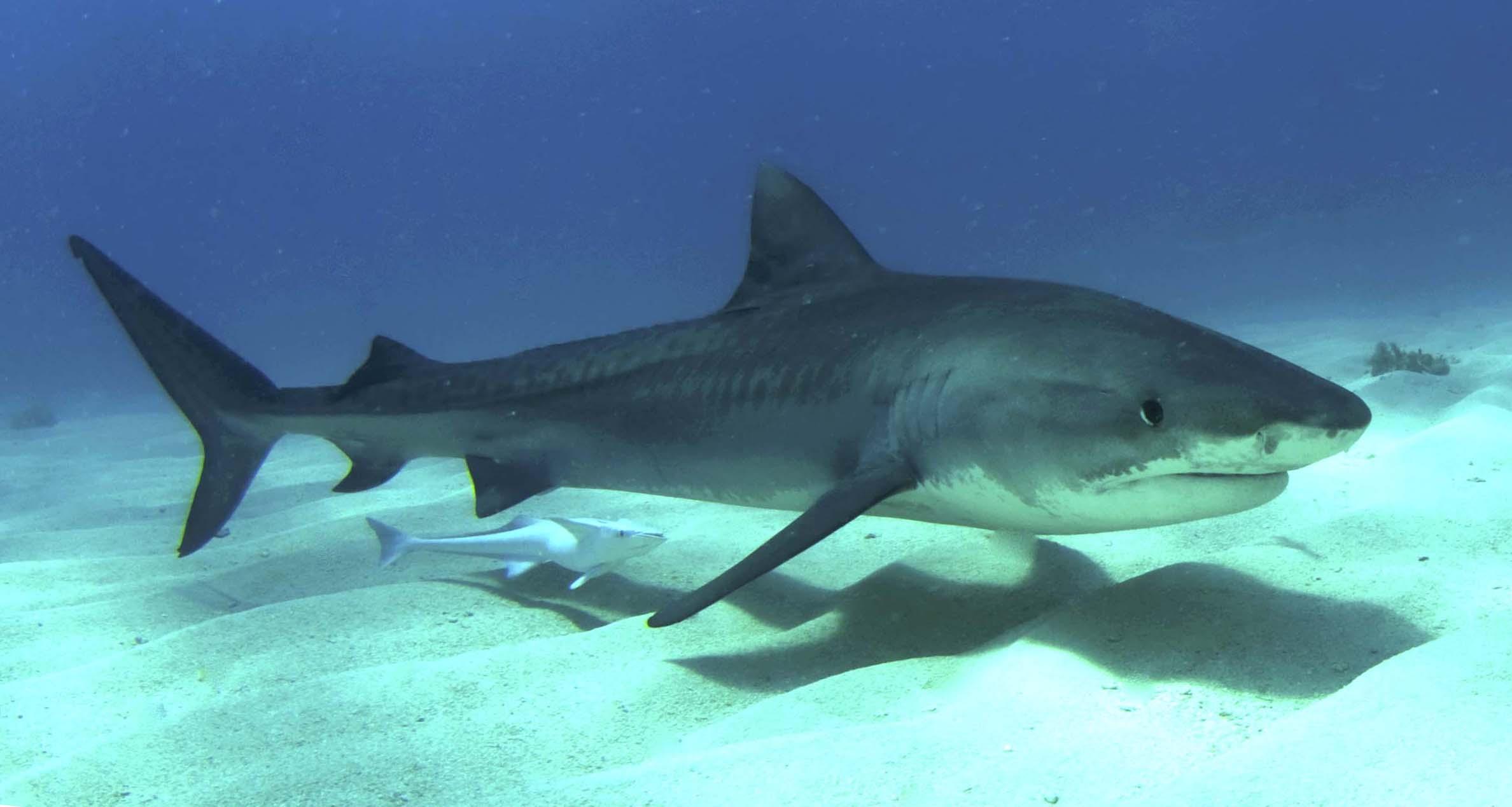 Акулы - Это Что Такое Акулы-2223