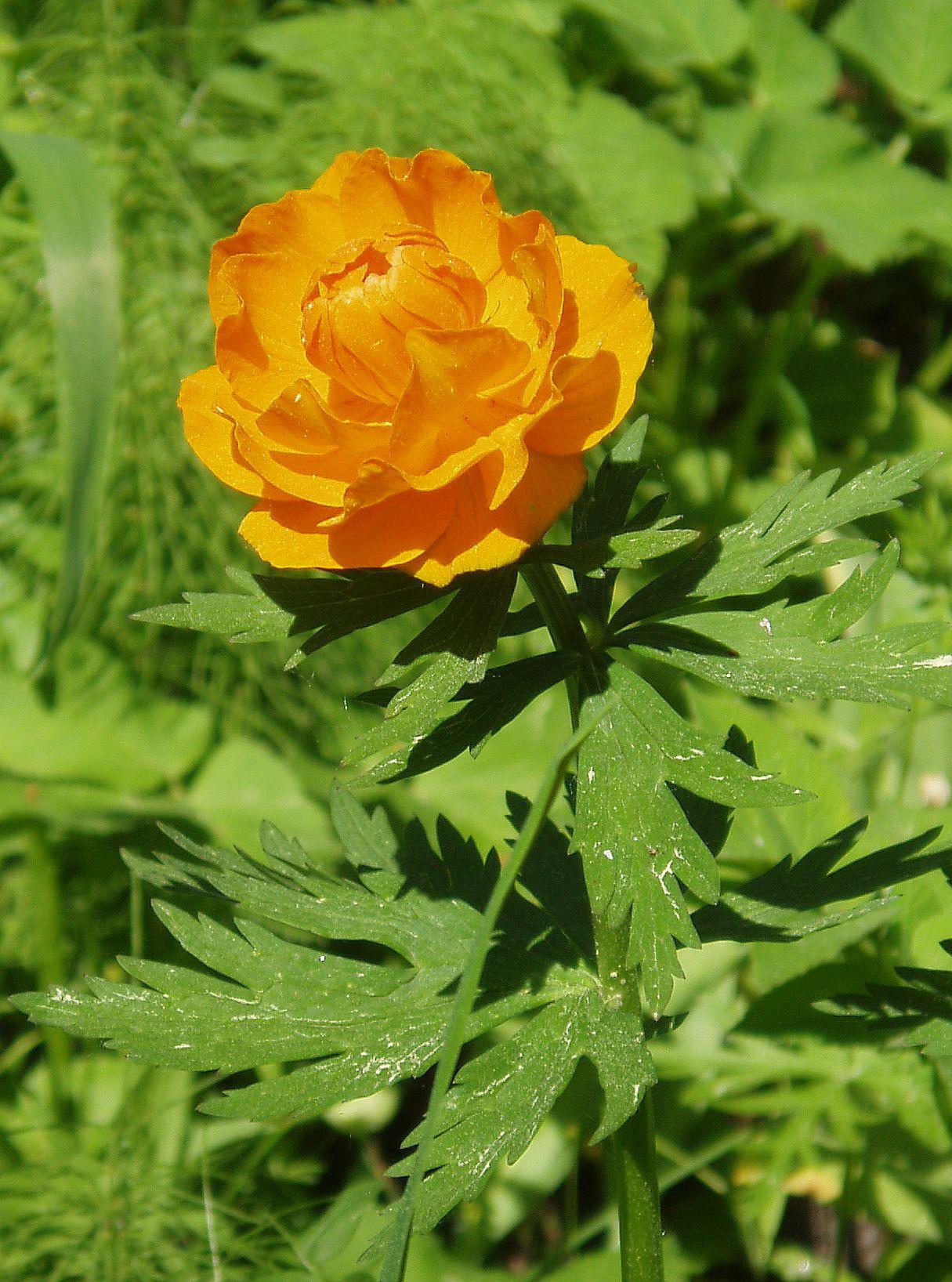 Картинки цветы из красной книги 3