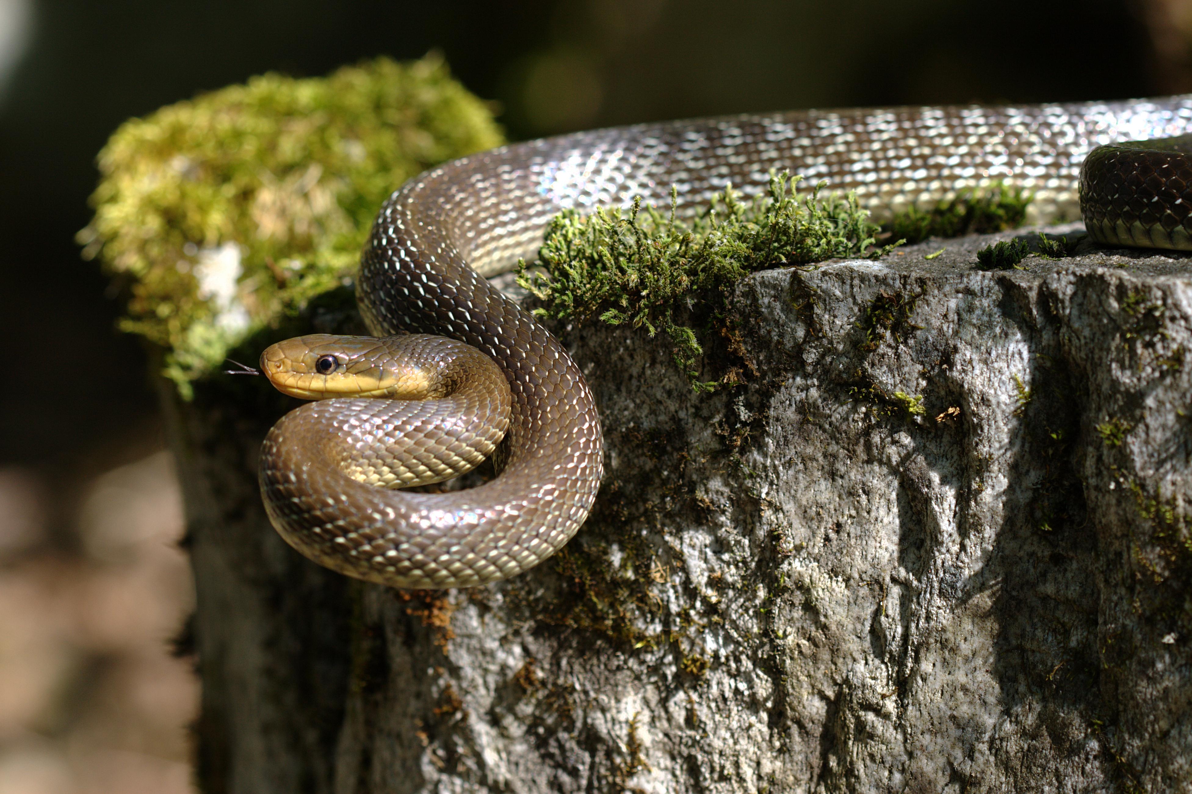 Член в виде змеи 23 фотография