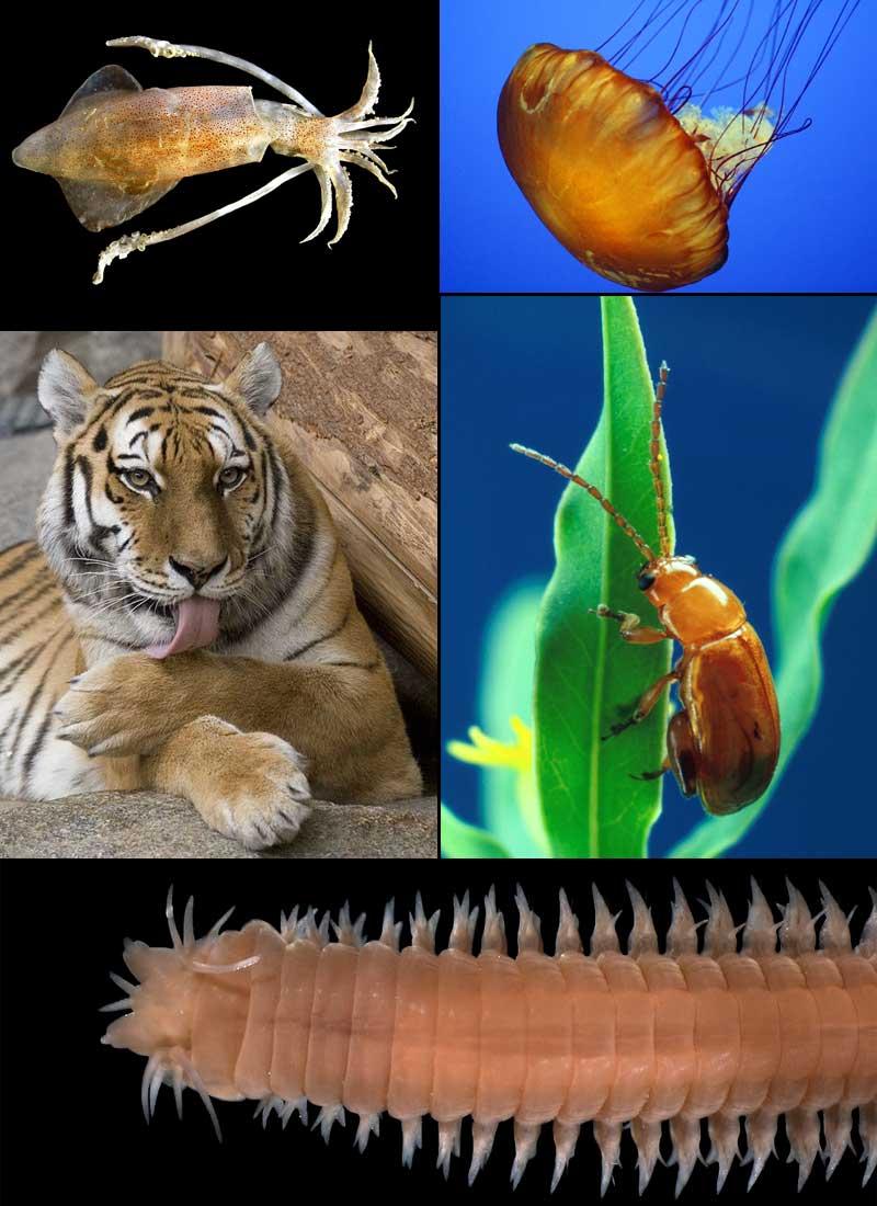 биологический словарь древних животных слово саблезубый тигр